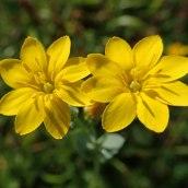 190928 wildflowers (23)