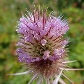 190928 wildflowers (25)