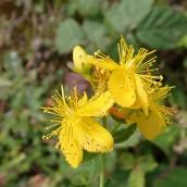 190928 wildflowers (27)