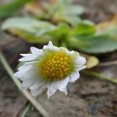 190928 wildflowers (28)