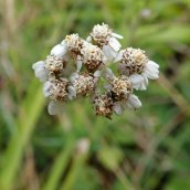 190928 wildflowers (32)
