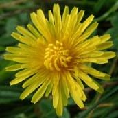 190928 wildflowers (4)