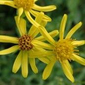 190928 wildflowers (7)