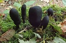 191005 fungi (12)