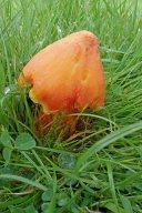 191005 fungi (21)