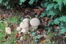 191005 fungi (7)