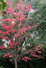 191015 autumn colour (1)