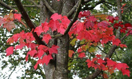 191015 autumn colour (2)