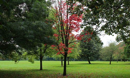 191015 autumn colour (4)