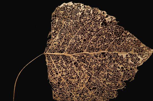 191020 leaf skeleton