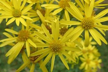 191024 zigzag wildflowers (2)