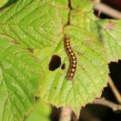 191119 autumn insects (6)