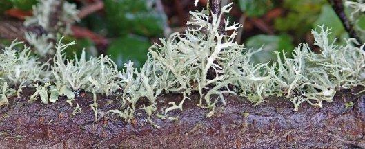 191126 lichen (1)