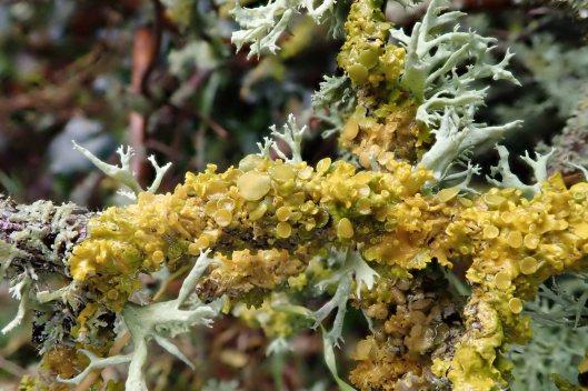 191126 lichen (3)