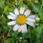 191208 daisy