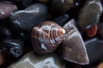 191212 sea shells (6)