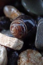 191212 sea shells (9)