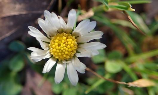 191215 daisy