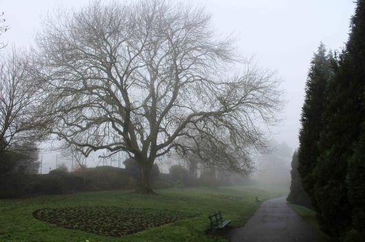 191230 trees in fog (1)