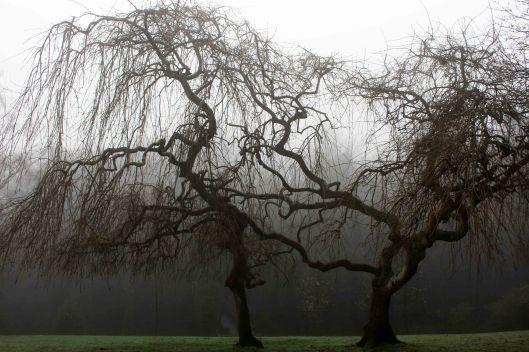191230 trees in fog (2)