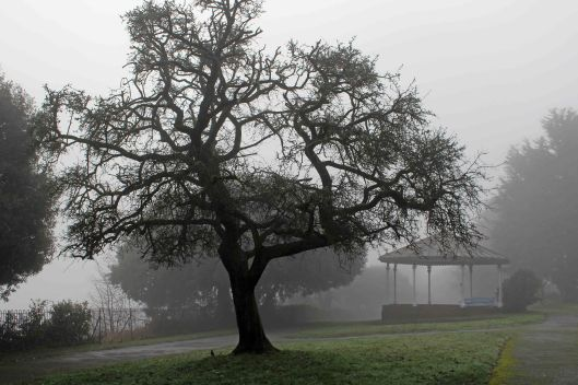 191230 trees in fog (3)