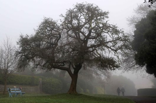 191230 trees in fog (4)