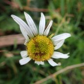 200102 15 mayweed sp