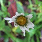 200102 6 daisy