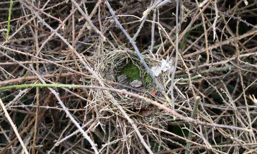 200104 birds nest (1)