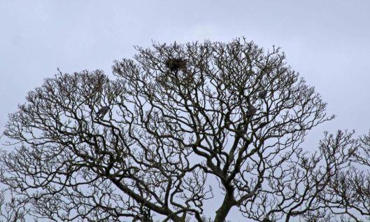 200104 birds nest (2)