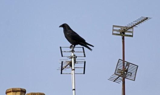 200106 raven (1)