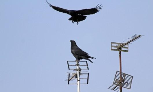 200106 raven (2)