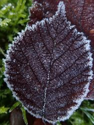 200118 frost (4)