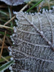 200118 frost (5)