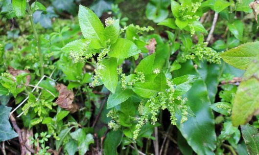 200209 1 Dogs mercury
