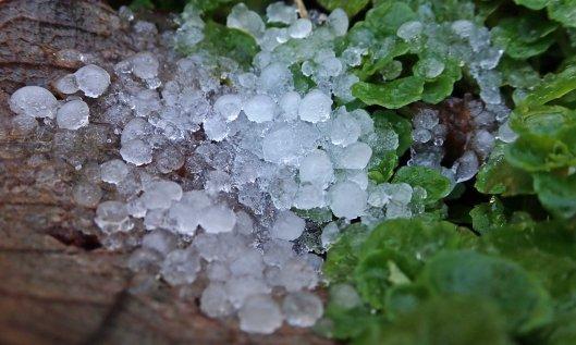200212 hail (1)