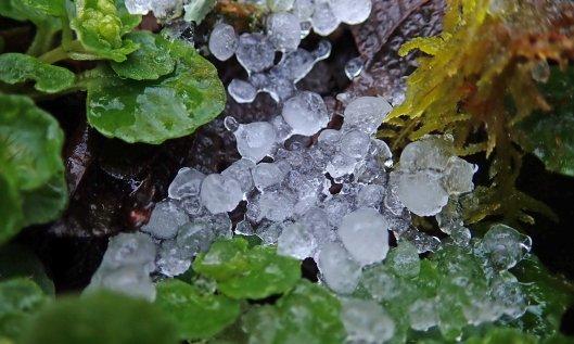 200212 hail (2)