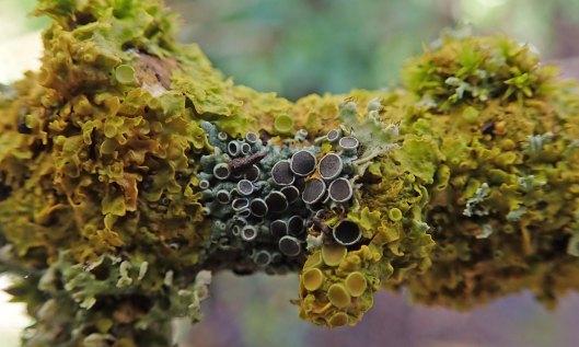 200225 lichen and fungi (1)