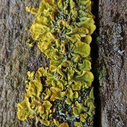 200225 lichen and fungi (2)