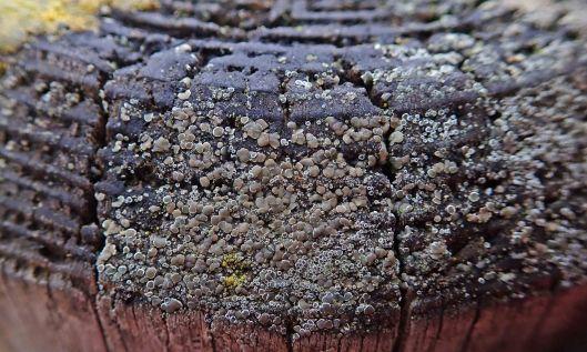 200225 lichen and fungi (4)