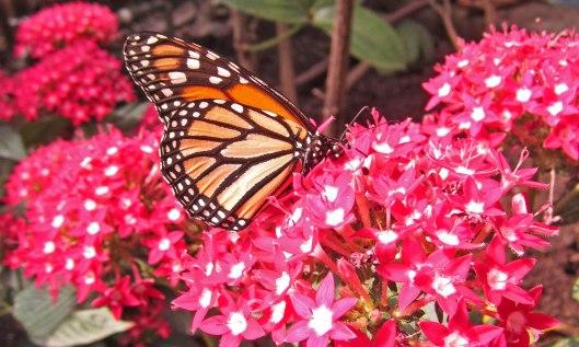 200226 Monarch