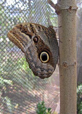 200226 Owl (2)