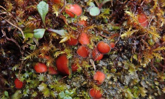 200317 eyelash fungi (4)