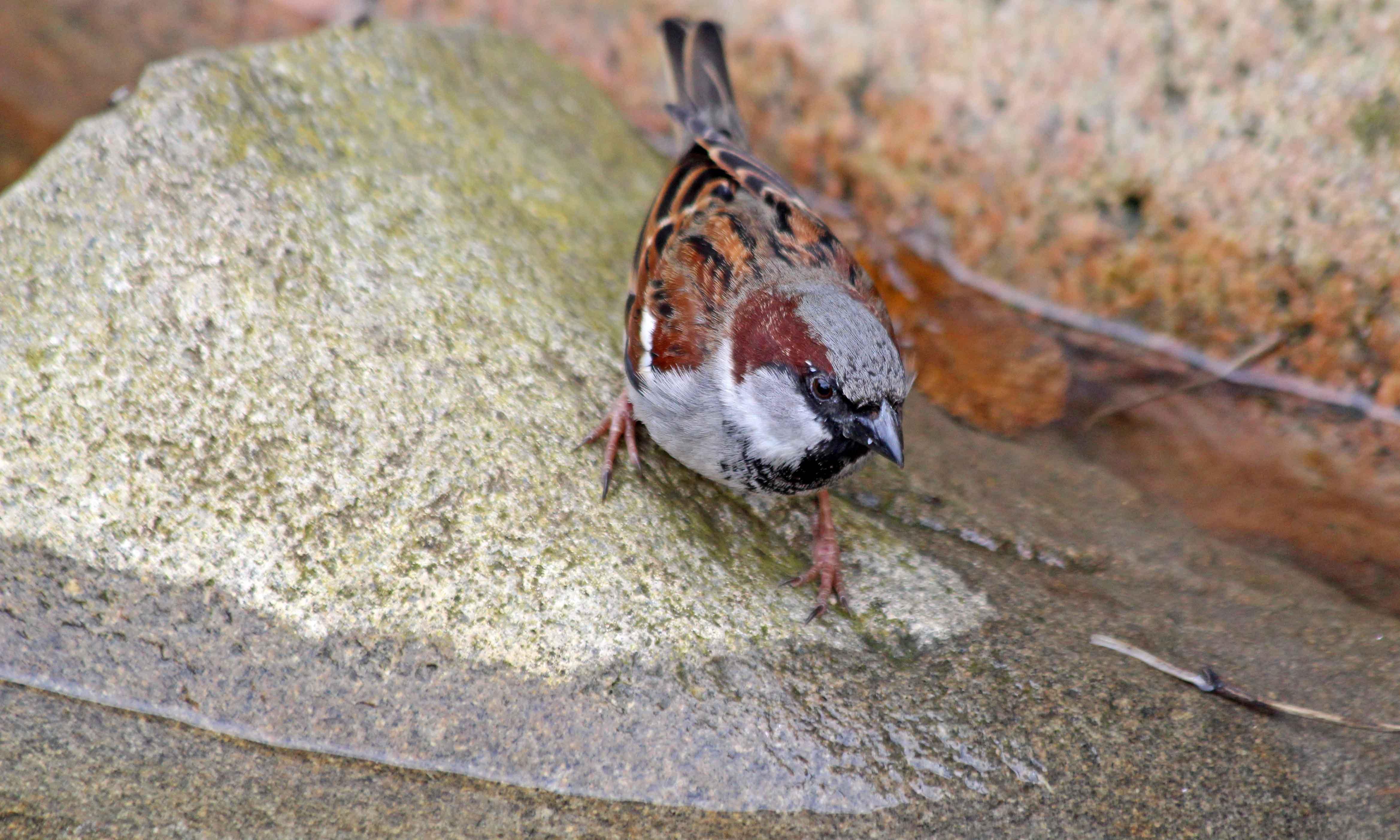 200320 4 sparrow