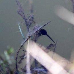 200324 frog tadpole (2)