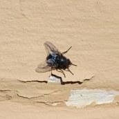 200404 16 fly