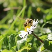 200404 18 bee sp