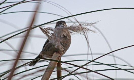 200413 sparrow (1)