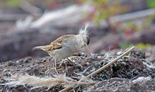 200413 sparrow (3)
