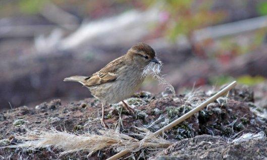 200413 sparrow (4)